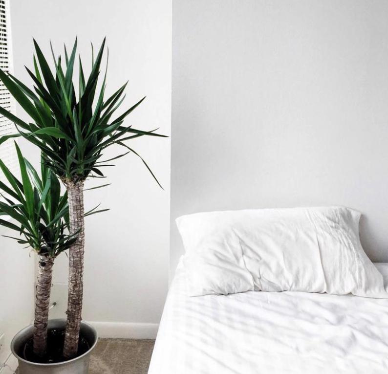 避免暴露于寒冷的冬季空气对植物健康至关重要