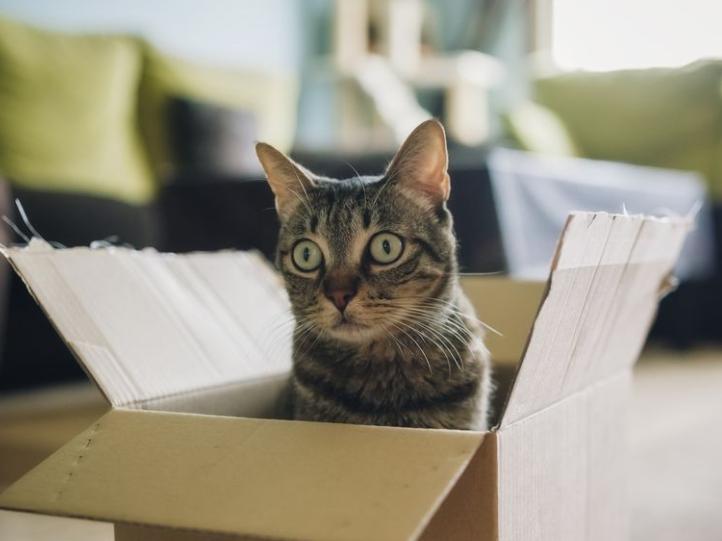 搬家前一脸懵逼的小猫