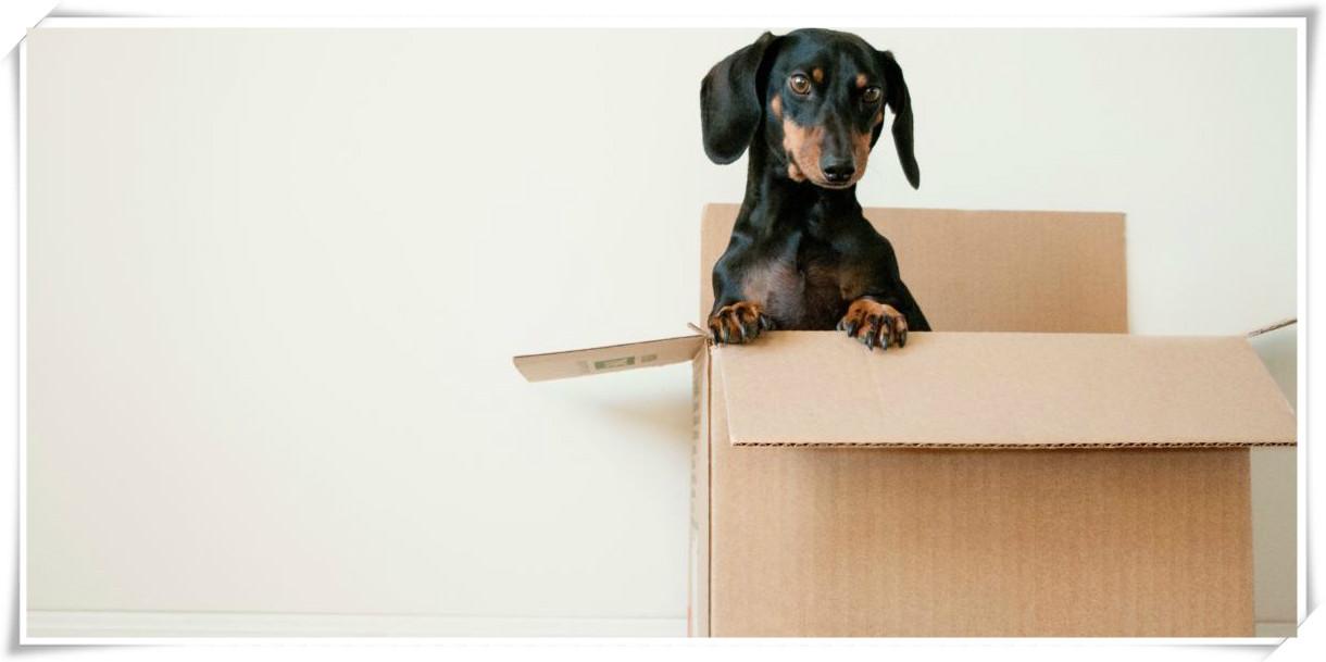 好的搬家公司一定拥有最好的员工